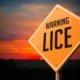Lice Warning